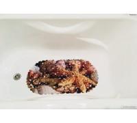 SPA-коврик для ванны на присосках цвет микс
